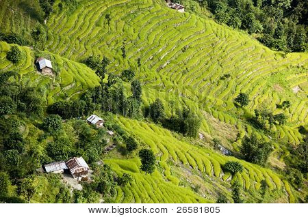 Aerial View Of Beautiful Rice Terraces On Mountain Slopes In Sikkim