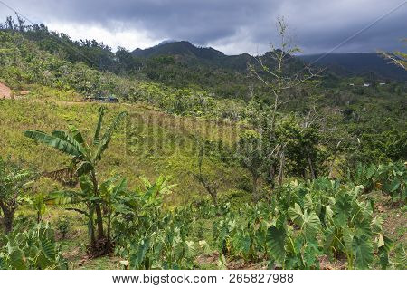 Foothills And Peaks Of Cordillera Central In Jayuya Puerto Rico