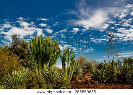View Of Tropical Landscape With Trees And Plants On The Blue Sky Background. Macro Photography Of Na
