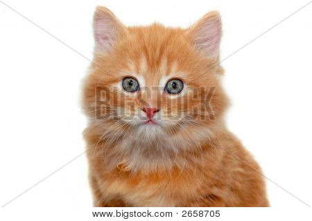 Really Cute Red Kitten 3