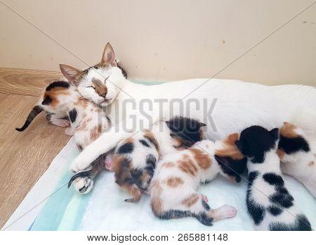 Pet Animal; Cute Cat Indoor. Mother Cat And Baby Cat.