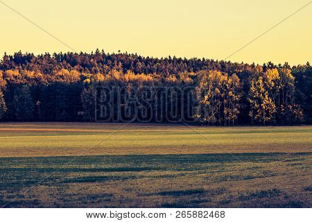 Autumn Outdoor Nature Scene With Tree And  Fields