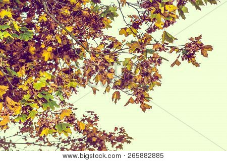 Autumn Brown Nature Scene With Yellow And Green Leaves