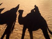 the shadow from camels going on desert poster