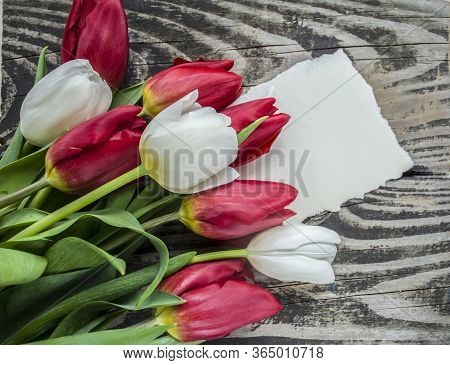White And Red Tulips On Wooden Background. Spring Concept With Place For Text.
