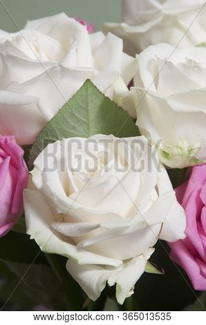 Roses Posy Over Green Background, Closeup Shot