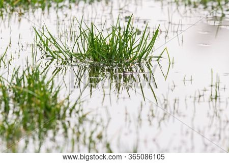 Heavy Rain And Grass