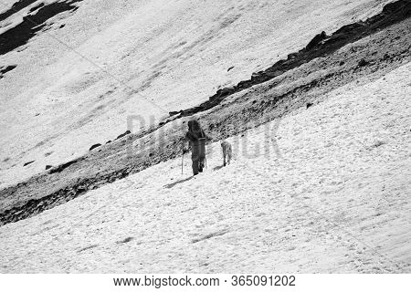 Hiker With Dog On Snowy Glacier And Dirty Avalanche Trace At High Mountains. Black And White Retro T