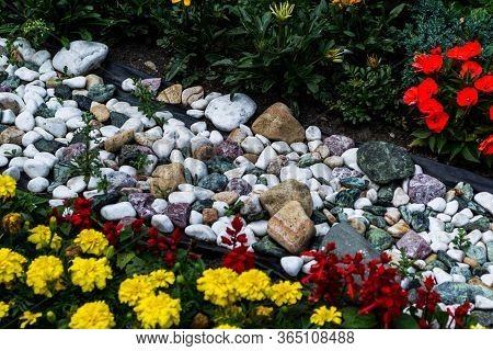 Multicolored Flower Bed. Beautiful Background Of Garden Flowers.