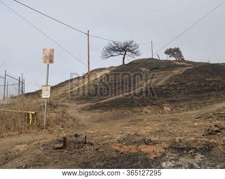 Burnt Hillside And Trails At Park