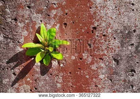 A Green Sprout Breaks Out Of The Concrete.the Concept Of Purposefulness And Perseverance