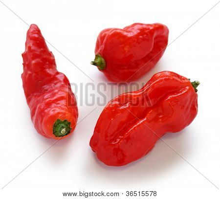 bhut jolokia, the hottest pepper in the world