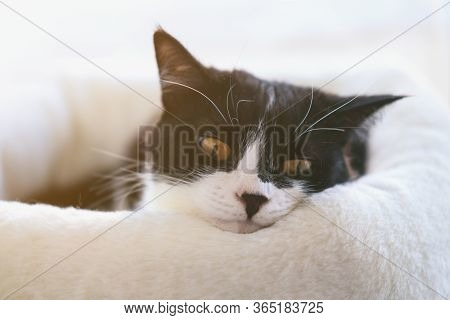 Funny Black And White Tuxedo Cat Is Lying On The Windowsill, Boredom, Comfort, Drowsiness. Self-isol