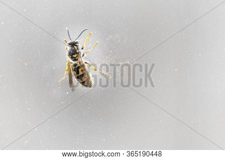 Closed Up Macro, Bee Isolated On Stone Background Education And Natural Concept.