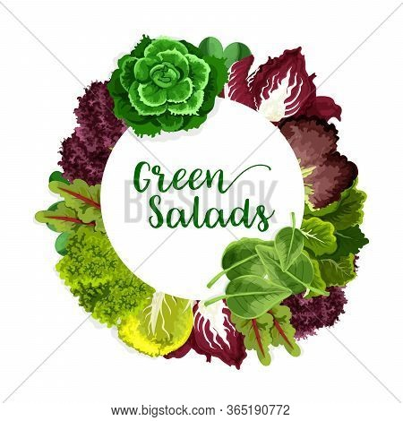 Greens And Lettuce Salad Vegetable, Vector Farm And Garden Veggies. Vector Green Spinach And Bok Cho