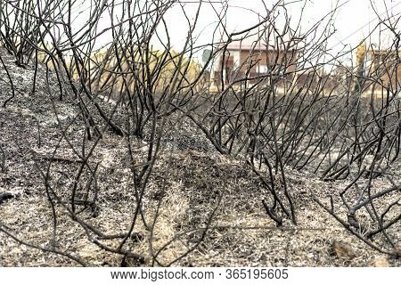 A Burnt-out, Charred Garden As A Result Of The Actions Of An Irresponsible Person. As A Result Of Ca