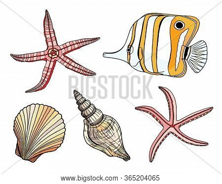 Tropical Fish, Seashell And Starfish Vector Set. Hand Drawn Tropical Underwater Marine Elements. Car