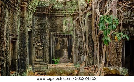 Roots of giant tree covering the ruin of Ta Prohm temple in Angkor Wat (Siem Reap, Cambodia)