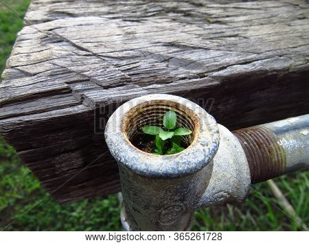 A Small Plant Grows Naturally In The End Of An Old Disused Water Pipe.