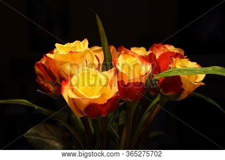 Yellow And Red Roses Bouquet On Dark Background.