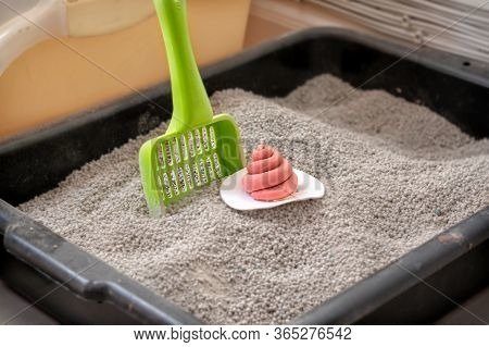 Bangkok, Thailand - May 07, 2020 - Generic Cat Clumping Litter Box With Unknown Brand Of Scoop And O