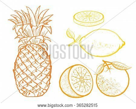 Exotic Fruits. Pineapple, Oranges, Lemon Vector Color Illustration Isolated On White