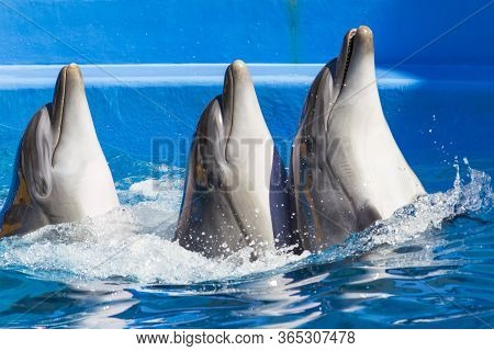 Three Dolphins Emerge From The Water With Space For An Inscription Or Text, Background