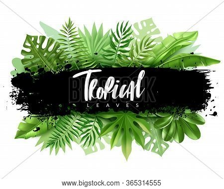 Tropical Leaves Poster. Horizontal Vector Illustration Of A Banner With Tropical Leaves In A Realist