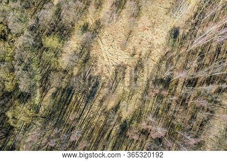 Deciduous Forest At Early Spring. Aerial Top View Of Shadow Bare Trees Silhouettes On Forest Ground