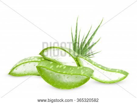 Aloe Vera Leaves Isolated On White Background