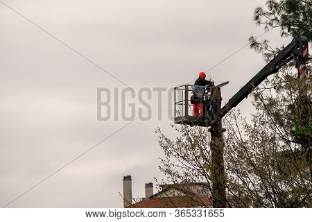 Worker With Chainsaw Pruning Trees, A Man At High Altitude On Lift With Articulated Hydraulic Arm An