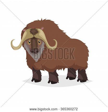 Cute Cartoon Muskox. Wild Animal. Vector Illustration For Child Books. Big Furry Cattle Animal. Isol