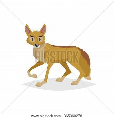 Cute Cartoon Coyote. Wild Animal. Vector Illustration For Child Books. Danger Predator Animal. Isola