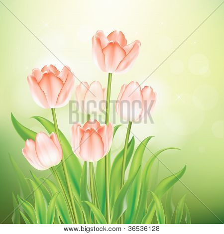 Tulips on nature background