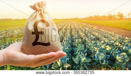 Farmer Holding A Money Bag On The Background Of Cabbage Plantations. The Development Of Agriculture