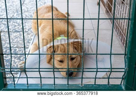 Dog In Animal Shelter Cage After Surgery