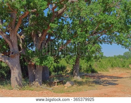 A Resting Place Under The Big Old Oak Tree In The Dalmatian Hinterland In Promina County At Dalmatia