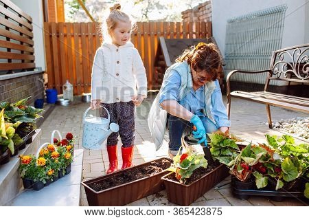 Happy Grandmother With Her Little Granddaughter Gardening In A Backyard. Different Generation. Grand
