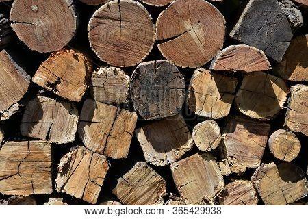 Pile Of Firewood Prepared For Winter Season