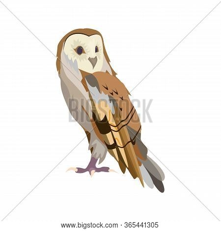 Night Owl Illustration. Bird, Big, Night Hunter. Nature Life Concept. Illustration Can Be Used For T