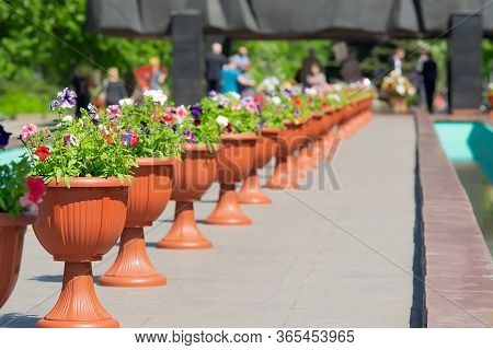 A Flower Pot, From Many Pots Standing In A Row, Against The Background Of A Memorial And People Who