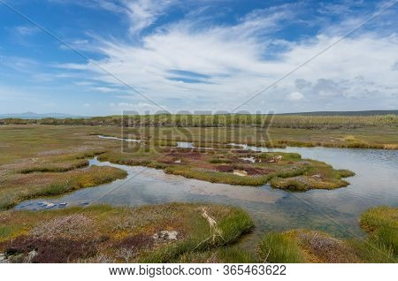 Wetlands Landscape With Aquatic Vegetation And Dry Yellow Plants. Wetland Conservation Ecology Lands