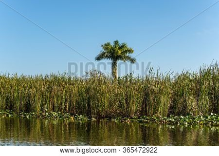 Scenic Landscape With Eternal Swamps - Flora And Reeds Of Everglades National Park In Florida, Usa -