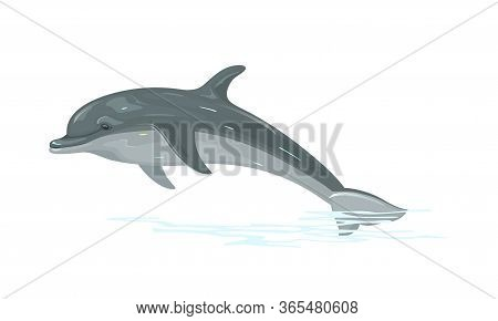 Dolphin Is Aquatic Mammal Within Infraorder Cetacea. Highly Social, Intelligent Marine Animal Living