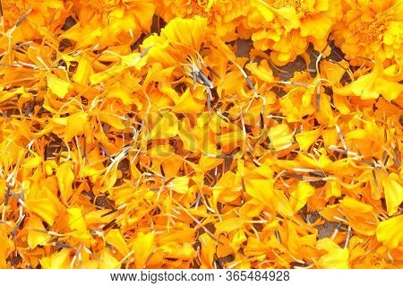 Marigold Flowers Petals Scattered On The Ground,marigold Flowers Petals  Background Theme, Flower Pe