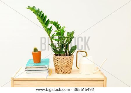 Zamioculcas, Cactus And Books On Wooden Shelf.  Home Garden And Reading. Stay Home
