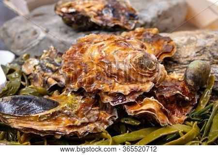 Fresh Zeeuwse Creuse Pacific Or Japanese Oysters Molluscs On Fish Market In Yerseke, Netherlands