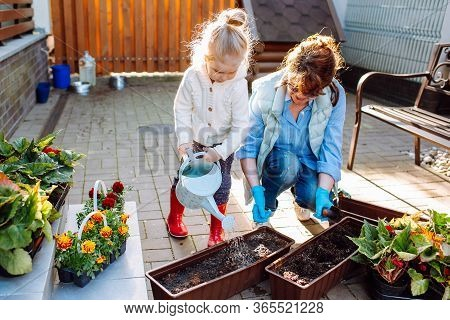 Grandmother With Her Little Granddaughter Gardening In A Backyard. Family Ang Different Generation.