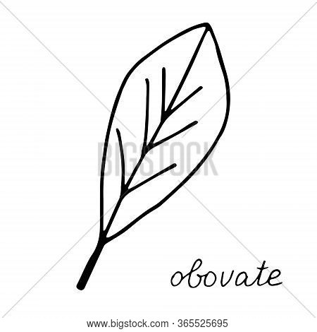 Hand Drawn Doodle Leaf. Black Shape With Different Forms. Obovate Leaf