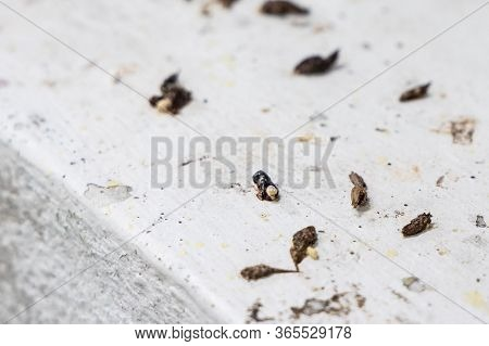 Unhygienic Droppings Shit Feces Excreted By House Lizards On Surface